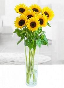 Miflora: Blumenstrauß Helia mit 7 Sonnenblumen für 12,90 Euro